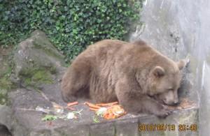 チェスキー・クロムロフ場内の熊