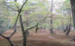 金閣寺の庭